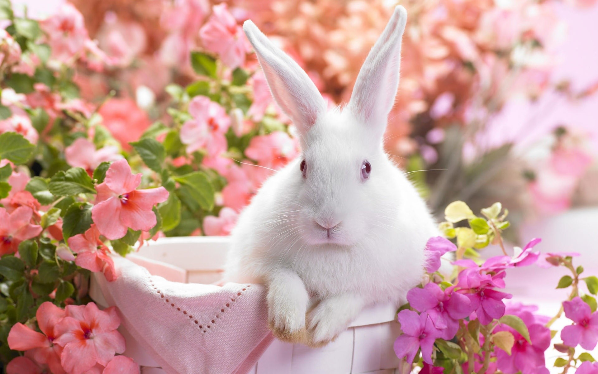 Easter Backgrounds For Your Laptop (7)
