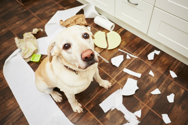 Things-You-Should-Know-Before-Getting-a-Pet
