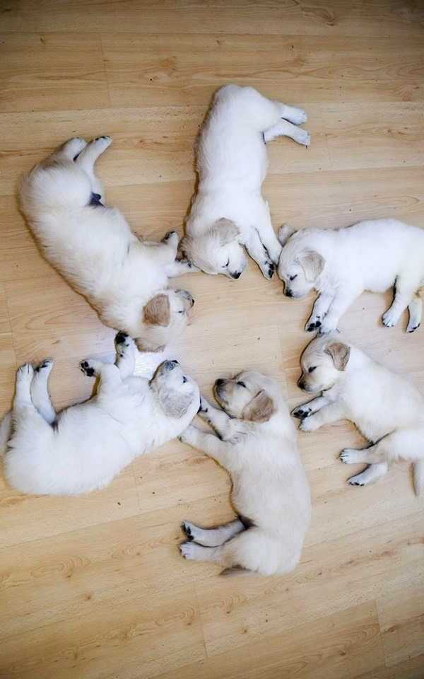 Cute Pictures of Animals Sleeping